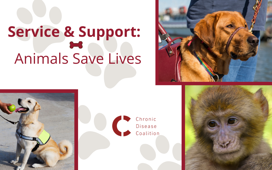 Service and Support: Animals Save Lives